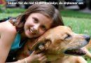 Sådan får du råd til det kæledyr, du drømmer om