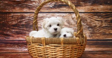 Husk at researche inden du køber hund